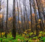 Free Photo - autumn forest