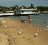 Free Photo - Beach in Sydney