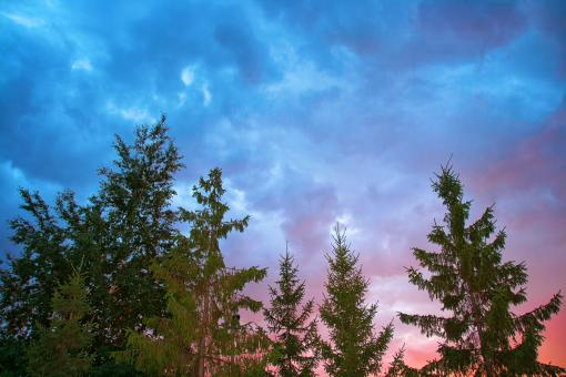 Sky & trees - Free Stock Photo