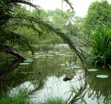 Free Photo - Tropical Lilly Pond