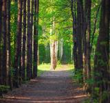Free Photo - forest scene