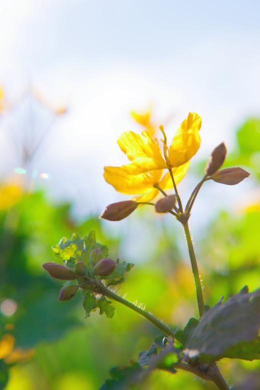 Yellow flower - Free Summer Stock Photos