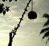 Free Photo - Coconut Shell Lamp