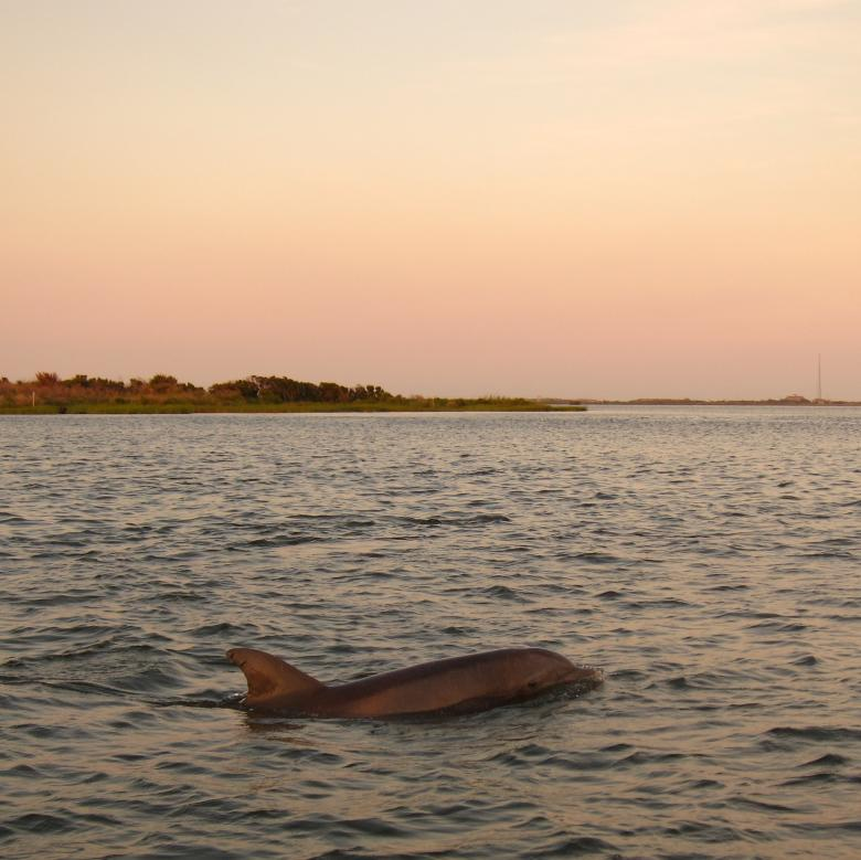 Free Stock Photo of Dolphin Swim Created by Brian