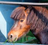 Free Photo - Horse close-up