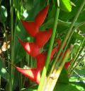 Free Photo - Red Tropical Flower