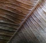 Free Photo - Leaf Veins