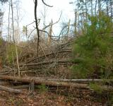 Free Photo - Tornado Damaged Forest