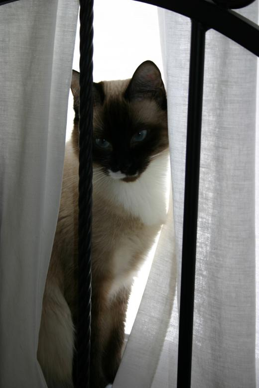 Free Stock Photo of Window Cat Created by Clifford M. Kinsman