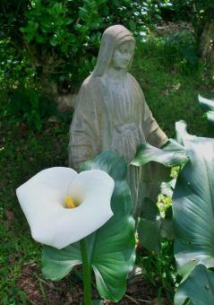 Blessed Virgin with Calla Lily - Free Stock Photo