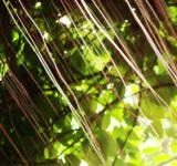 Free Photo - Abstract Jungle Pattern