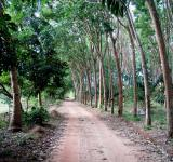 Free Photo - Forest Dirt Road