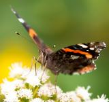 Free Photo - Butterfly gathering pollen