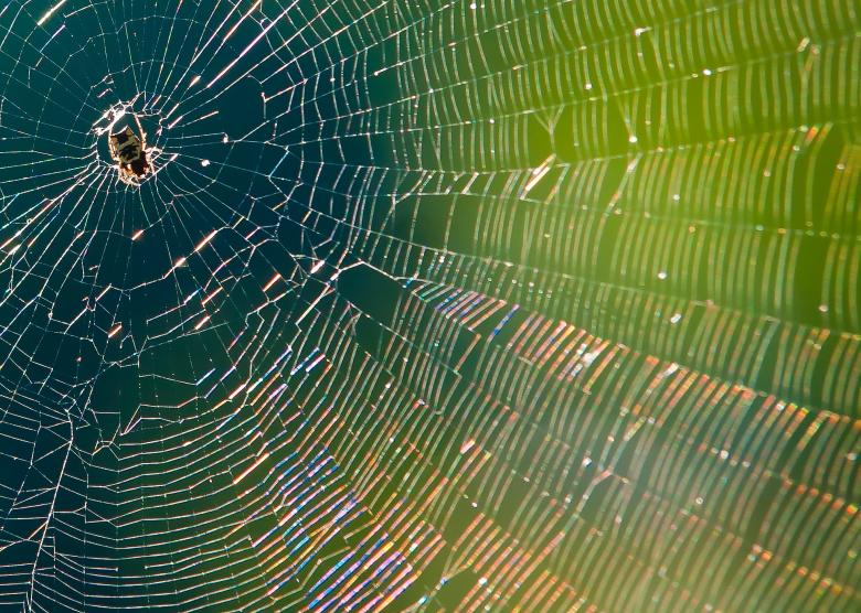 Free Stock Photo of Spider in web Created by agphotostock.com