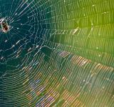 Free Photo - Spider in web