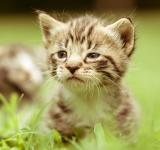 Free Photo - Adorable curious kitty