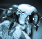 Free Photo - Bumble bee macro