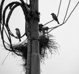 Free Photo - Birds and nest