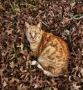 Free Photo - Autumn cat 2