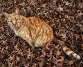 Free Photo - Autumn cat 1