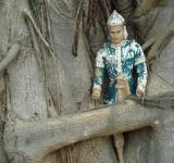 Free Photo - Buddhist Icon in a Tree
