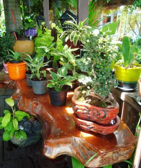 Tropical Potted Plants - Free Stock Photo