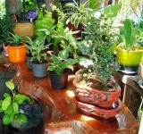 Free Photo - Tropical Potted Plants