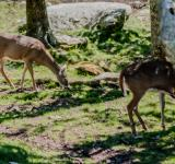 Free Photo - Deer feeding