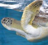 Free Photo - Sea Turtle Aquarium