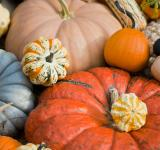 Free Photo - Squash and Pumpkins