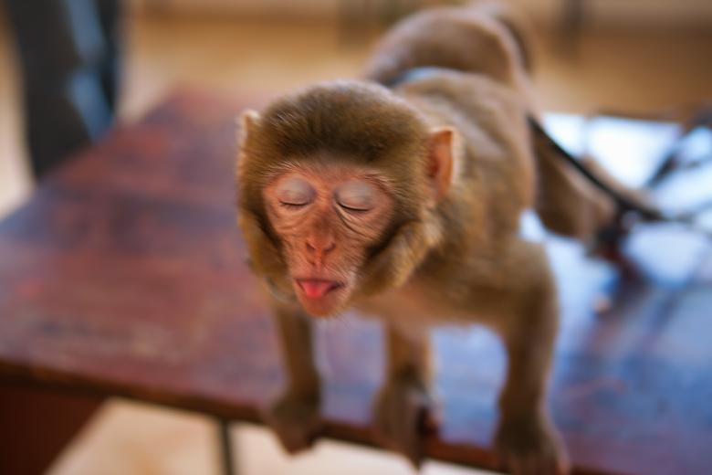 Free Stock Photo of monkey Created by 2happy