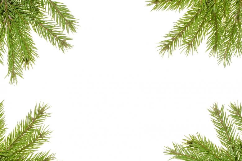 Free Stock Photo of Fir branches Created by 2happy