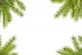 Download Fir branches Free Photo