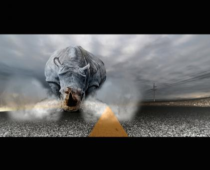 Rhinoceros chaos - Free Stock Photo
