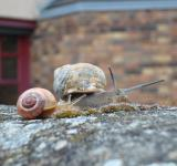 Free Photo - Snail family