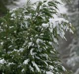 Free Photo - Trees covered in snow
