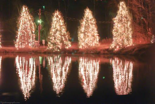 Christmas trees reflection - Free Stock Photo