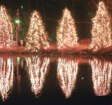 Free Photo - Christmas trees reflection