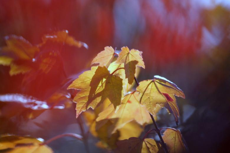 Free Stock Photo of Autumn colors Created by agphotostock.com