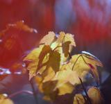 Free Photo - Autumn colors