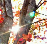 Free Photo - Fall season