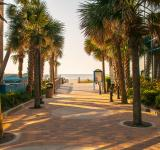 Free Photo - Palm tree alley