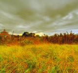 Free Photo - Yellow Landscape