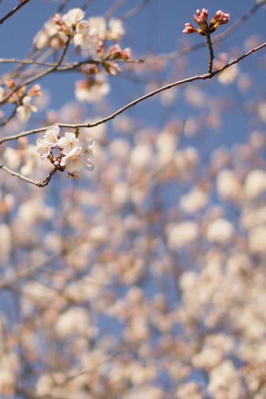 Free Stock Photo of Spring bloom Created by agphotostock.com