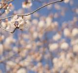 Free Photo - Spring bloom