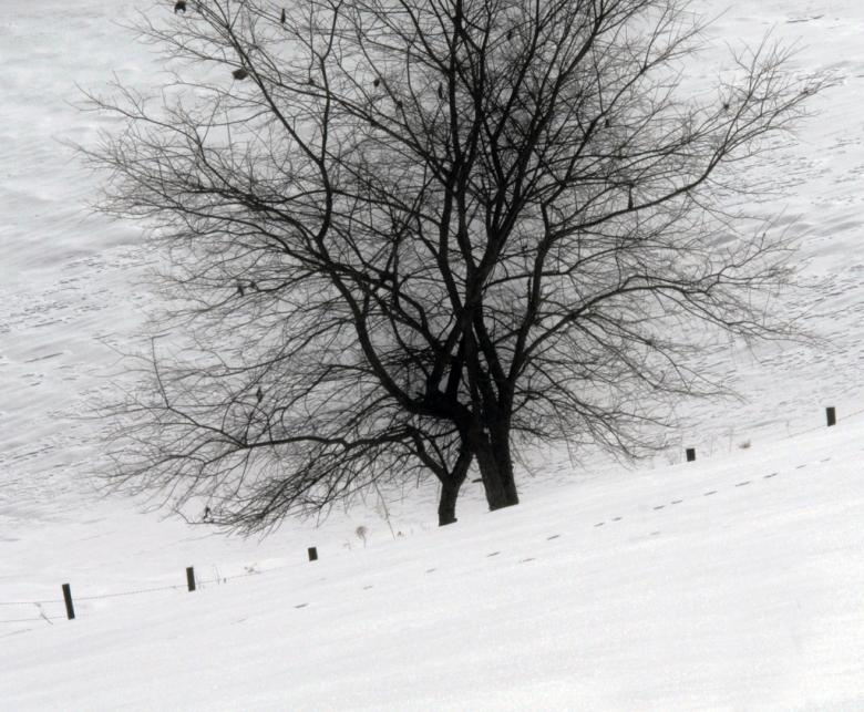 Free Stock Photo of Trees covered in snow Created by agphotostock.com
