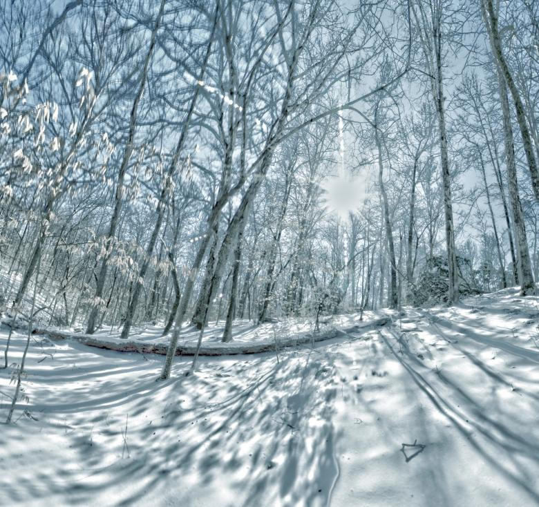 Free Stock Photo of Trees covered in snow - Winter Time Created by agphotostock.com