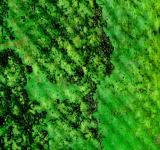 Free Photo - Green Gunge Texture