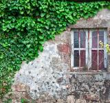 Free Photo - Ivy Covered Wall