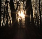 Free Photo - Sun shining through trees